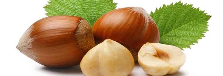 польза от лесных орехов