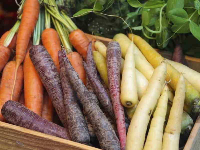 разнообразная морковь