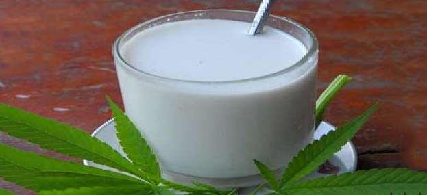 молоко из конопли