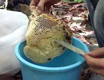 туаланговый мед