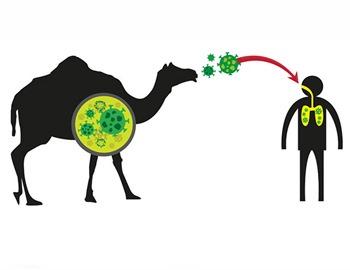 передача простуды от верблюда
