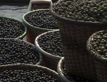 ягоды асаи берри