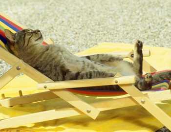 кот загорает на солнце