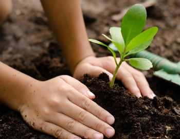 посадили растение