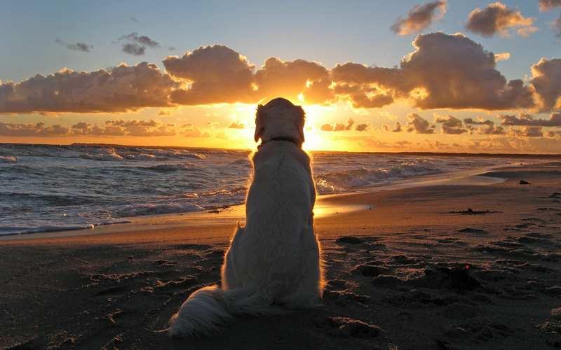 смотреть на солнце