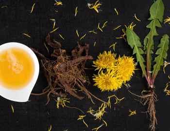 травы полезные для щитовидки