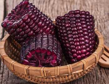 пурпурная кукуруза