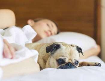 собака спит с хозяином в постели