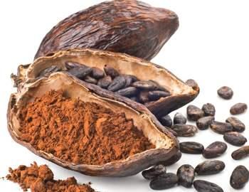 измельченные какао бобы