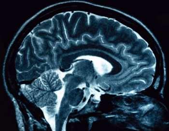киппокамп мозга