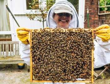 ухаживает за пчелами