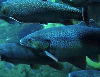 рыба в аквариуме